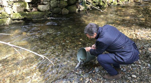 Repovoamento de trutas no rio Aguilhão