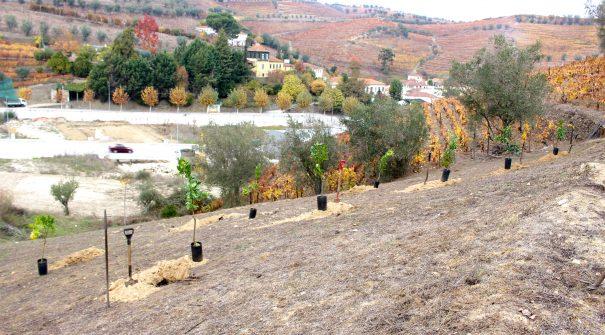 Plantação de Árvores na Zona Oficinal
