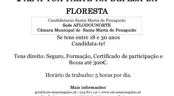 Candidaturas abertas – Voluntariado Jovem na Floresta