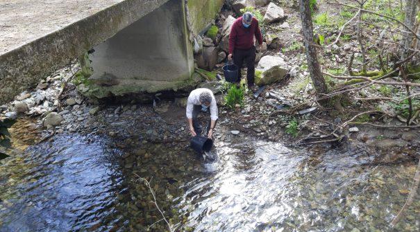 Ação de repovoamento de trutas do rio Aguilhão 2021