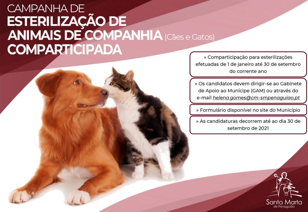 Campanha Esterilização de Animais (2) copiar